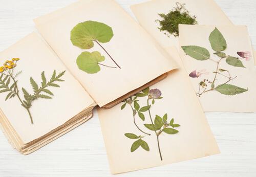 Créer son herbier et visite de la forêt pédagogique !
