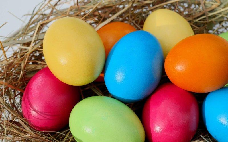 Chasse à l'œuf