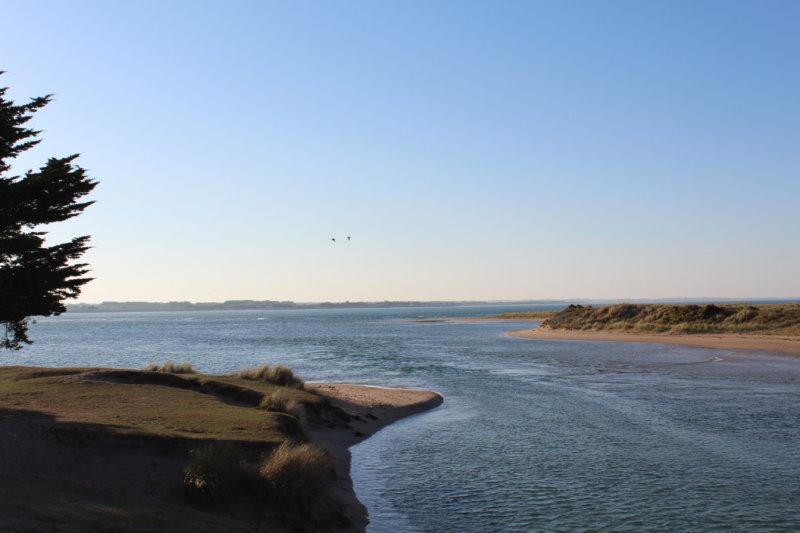 CONCOURS PHOTO DE L'APP2R : « La faune de la côte des Havres »